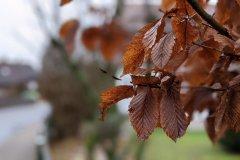 Google Pixel 4a - Kamera - Herbstblätter
