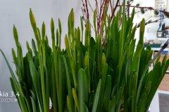 Pflanze - Nokia 3.4 Hauptkamera
