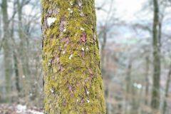 Baum mit Moos - Nokia 5.4 Hauptkamera