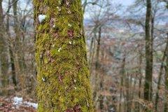Baum mit Moos - S20 FE Hauptkamera