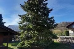 Samsung Galaxy A50 - Baum im Weitwinkel